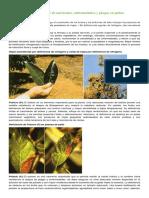 Guía FoDeficiencias de Nutrientes Paltos