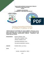 Proyecto Productivo Cacao - Nilder y Otros