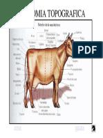 anatomia-de-bovino.pdf