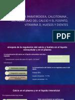 Funciones Reproductoras y Hormonales Masculinas (y Función