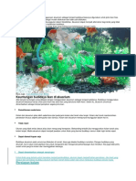 Budidaya Ikan Di Akuarium
