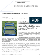 Duckweed Growing Tips and Tricks _ Duckweed Gardening