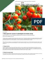 7 Dicas Para Ter Sucesso Na Plantação de Tomate Cereja