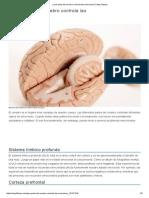 ¿Qué parte del cerebro controla las emociones_ _ Muy Fitness.pdf