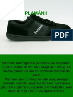 Plamanii