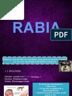 25953412 Virus de La Rabia Humana