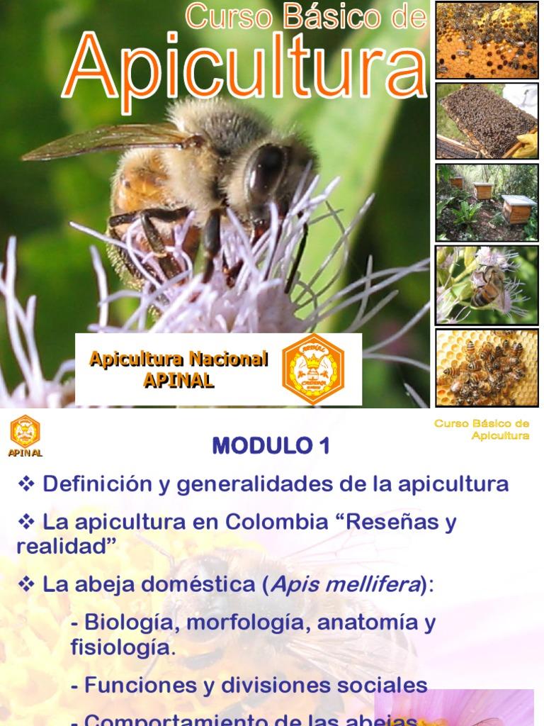 Curso de Apicultura Bomberos - Apinal.pps