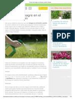8 Usos Del Vinagre en El Huerto y Jardín _ Plantas