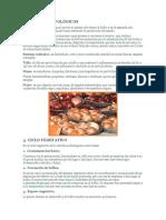 Cebolla Peruana