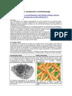 Cartílago articular Difus.pdf