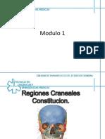 Regiones Cranianas Libro