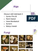 Algae Fungi