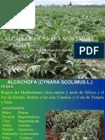 Alcachofa (Cynara Scolimus l.) 1