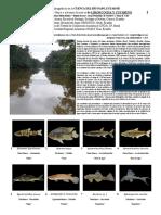 811_ecuador-peces_de_cuyabeno.pdf