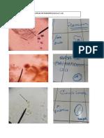 Láminas de parasito I(Prácticas 3,4,5,6,7 y 8).pdf