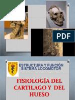 Clase de Fisiología Del Cartílago y Hueso