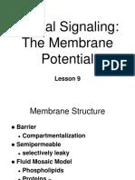 _BN09 Membrane Potential
