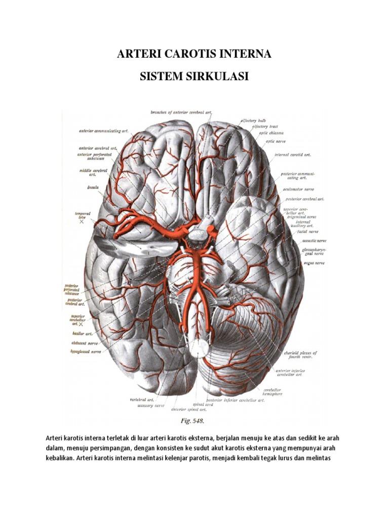 Gemütlich Anatomie Diagramm Bauch Ideen - Anatomie Ideen - finotti.info