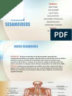 HUESOS SESAMOIDES