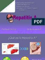 123882808-Hepatitis-A-2