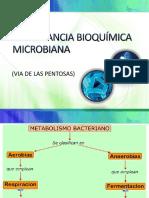Importancia Bioquímica Microbiana
