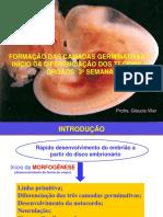 3º Semana fetal