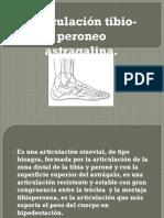 Tibio-peroneo astragalina