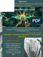 neuroembriologia