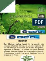 Moringa II