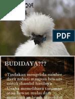 Budidaya Unggas Petelur Dan Pedaging