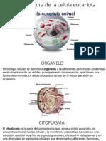 7-2 estructura de la celula eucariota