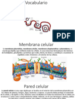 cell membrane vocabulario