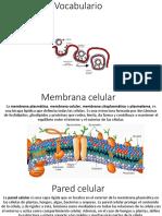 cell membrane vocabulario