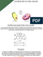 7-3 la diversidad de la vida celular