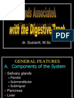 Glands Associated With Digestive-ss