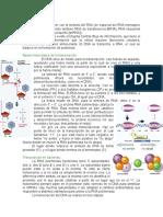 Transcripcion_del_DNA.doc