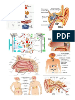 biologi.docx