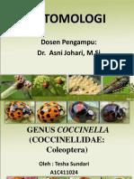 Genus Coccinella