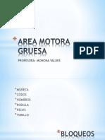 Area Motora Gruesa