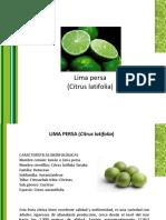 Presentacion Lima Persa