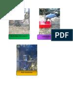 aves secret 2.pdf