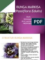Pengamatan Bunga Markisa ( Passiflora Edulis)