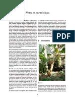 BANANO Musa × paradisiaca