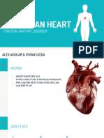 the human heart lab - alex   viv - 10 23 17
