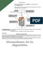 El aparato digestivo 4°