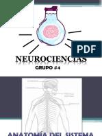 Anatomía del Sistema Nervioso Periférico.pptx