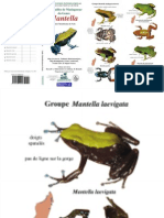 Mantella Guide French