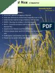 4th November,2017 Daily Global Regional Local Rice E-newsletter
