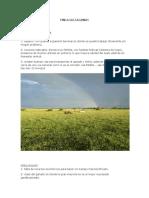 Analisis DOFA y Metodo Canvas