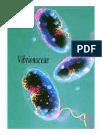 10-vibriobrucela